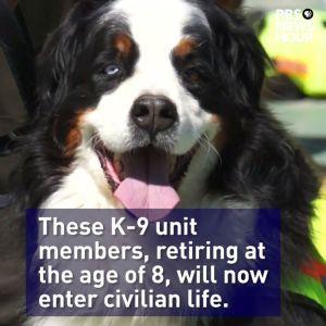 16 police dogs in Ecuador got a VIP send-off into retirement. Congratulations! (From PBS NewsHour) #news #alternativenews