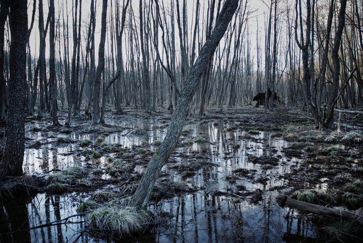 https://flic.kr/p/sQM15M | Untitled | Set:  Nature - Forests (Helsinki, Finland)