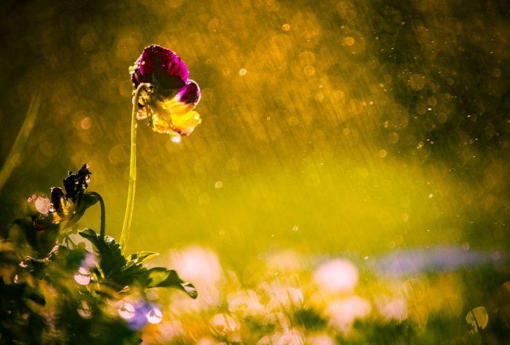 in light by Nikoletta Kolozs