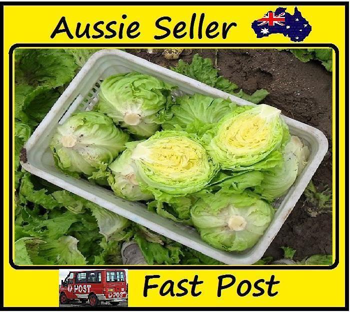 100 Pcs Crisp US Lettuce Seeds Vegetable Plants Seed Easy Grow For Home Garden