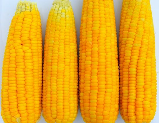"How to never Shuck corn again!  The Fastest, Easiest Way to Shuck Corn Is With Your Microwave - ""the ears basically slide out, husk- and silk-free!"""