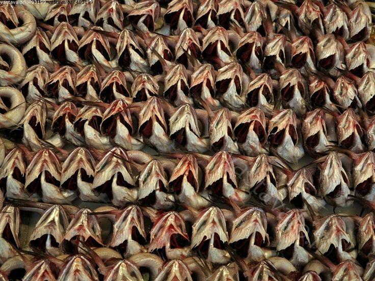 Kala kuoro - kala kalatiski kalakauppa asetelma esillepano kidukset rivi järjestys asento pyrstö ruoka ravinto kalastus elinkeino kauppahalli myynti kalamyynti