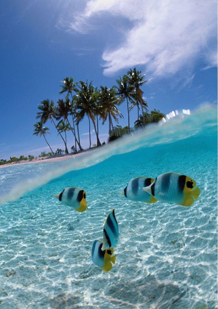 Bunaken Island,Sulawesi, Indonesia: