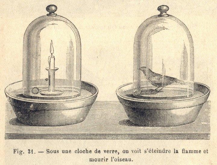 349 best ideas about sous cloche sous verre under glass for Cloche verre decorative