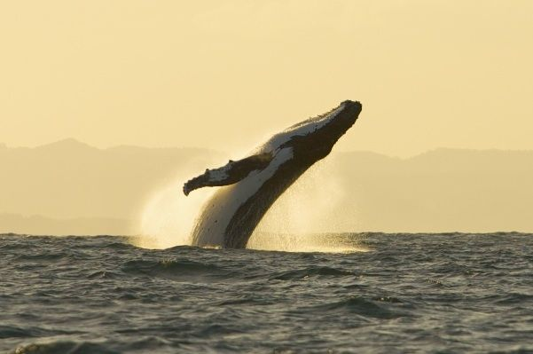 #Whalewatching near #ByronBay, #Australia #travel