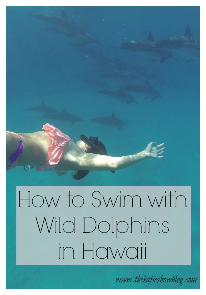 A guide to one of the most magical experiences you can have - swimming with wild dolphins in Hawaii.