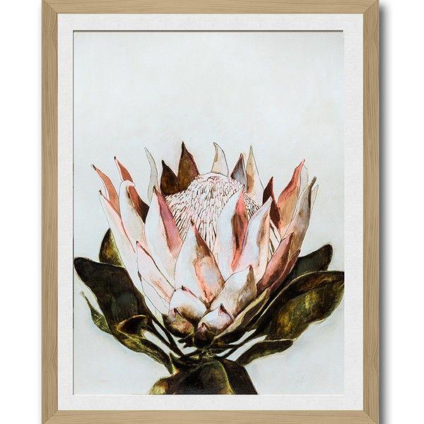 Protea Botanical 1