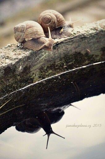 Slow..