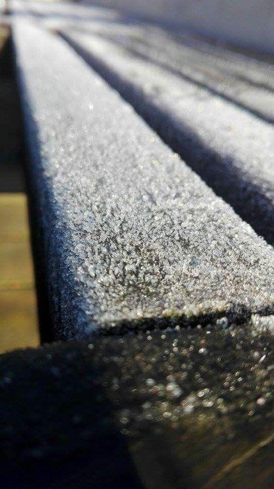 Morning frost. By Christy-Lynn Breetvelt