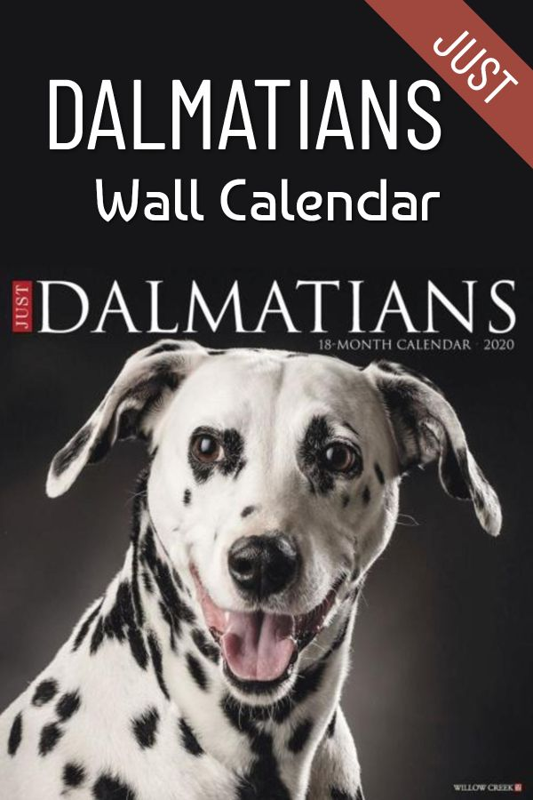 These Handsome Spotted Dogs Make Great Pictures For A Calendar