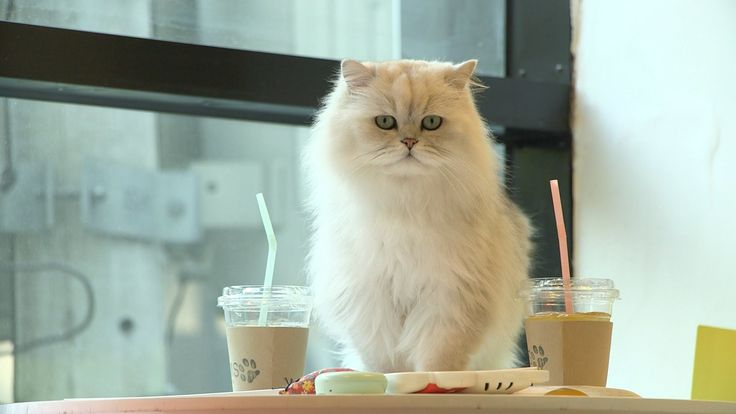 Cat cafe's are all the rage in Seoul, South Korea. Tour Tom's Cafe in Hongdae, a cafe that carries about 30 cats daily.