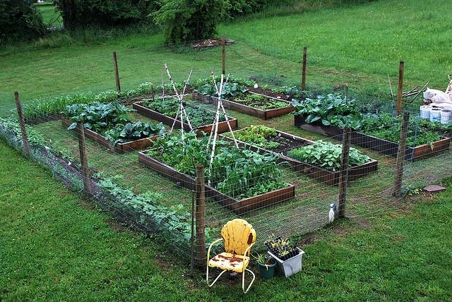 The perfect vegie garden!  i would like a little garden