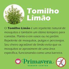 primavera-garden-tomilho-limao