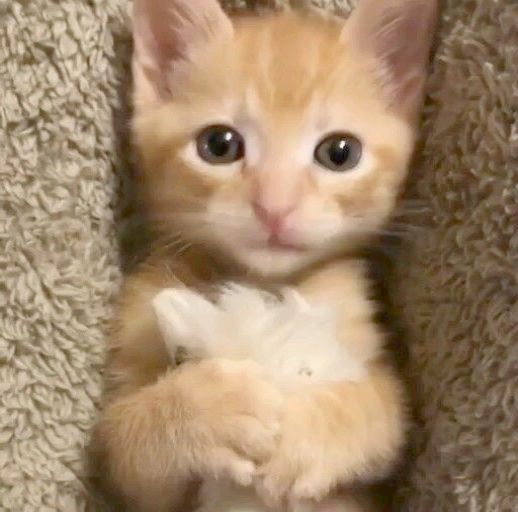 Cute Animals Funny Videos Download Another Adorable Kitten And