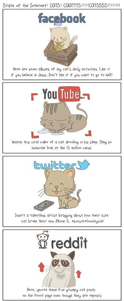 Social cats, #social network's stars