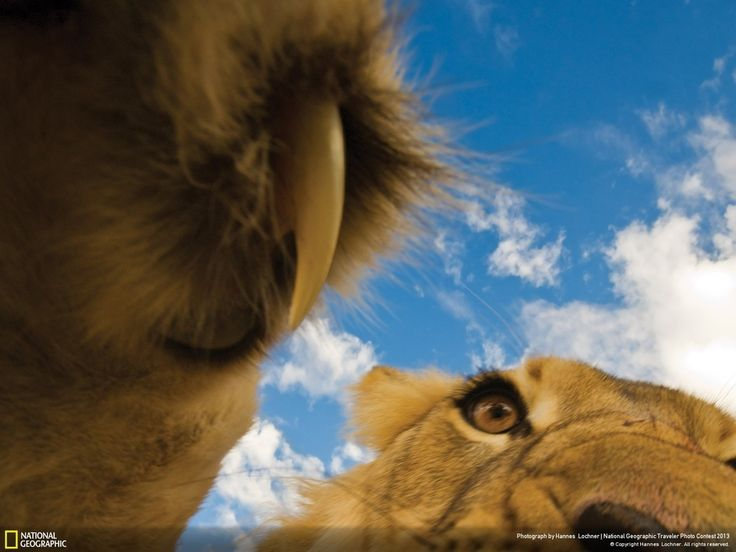 The 35 Most Spectacular Wildlife Photos From The National Geographic Traveler Photo Contest