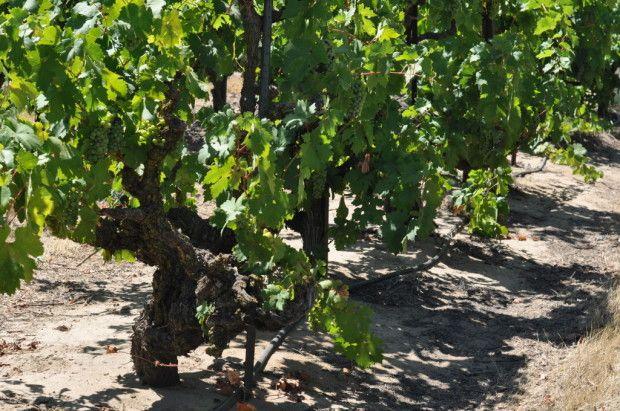 aa meetings berkeley walnut and vine Aa meetings in berkeley, california if you are looking for help, call (800) 429-7690 now.