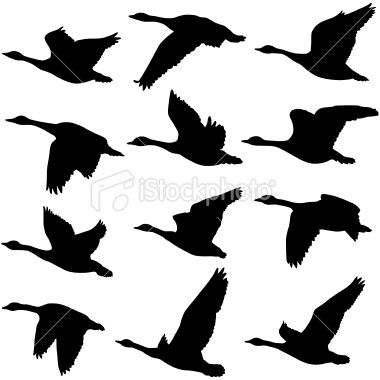 Google Image Result for http://i.istockimg.com/file_thumbview_approve/10392599/2/stock-illustration-10392599-flying-geese-silhouettes.jpg