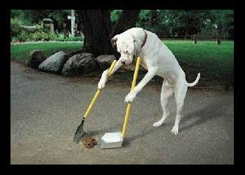 Do you have a problem with owners not picking up after their pets?