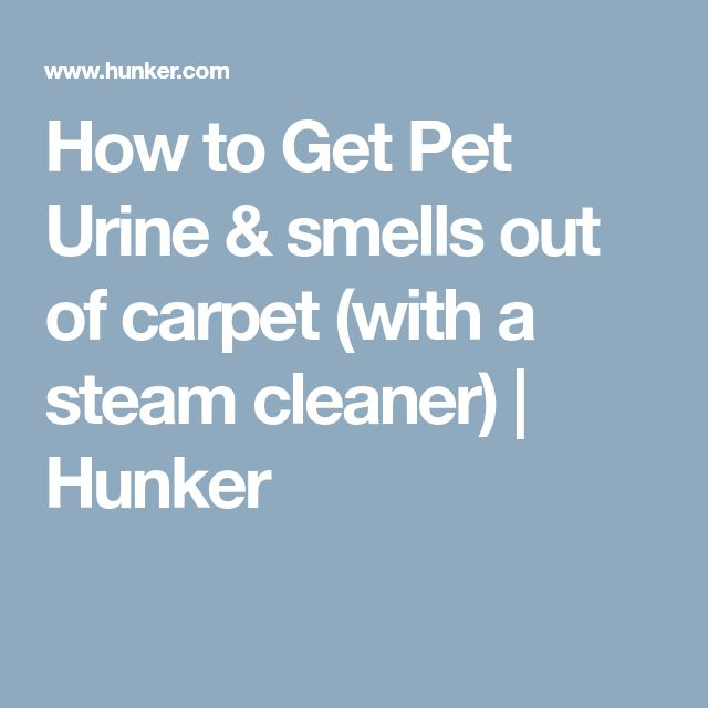 How to Get Pet Urine & smells out of carpet (with a steam cleaner) | Hunker