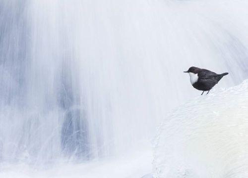 Zoom sur le travail de notre visionnaire suédois Jonathan Stenvall dont de nombreuses photos ont été remarquées par des récompenses internationales. Photo : Jonathan Stenvall / #OlympusOMD E-M1 Mark II / M.ZUIKO DIGITAL ED 300mm 1:4.0 IS PRO #Olympus #Zuiko #igers #shootoftheday #picoftheday #bird #birds #nature #naturephotography #igers #minimalist via Olympus on Instagram - #photographer #photography #photo #instapic #instagram #photofreak #photolover #nikon #canon #leica #hasselblad…