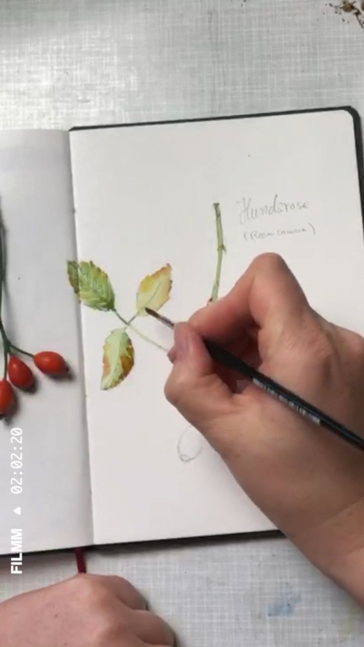 Hagebutten in Aquarell im Skizzenbuch (Blätter) – Aquarell Technik  | Watercolor Technique