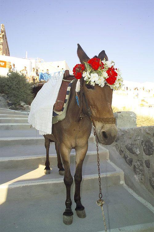 Wedding donkey, Santorini ;)
