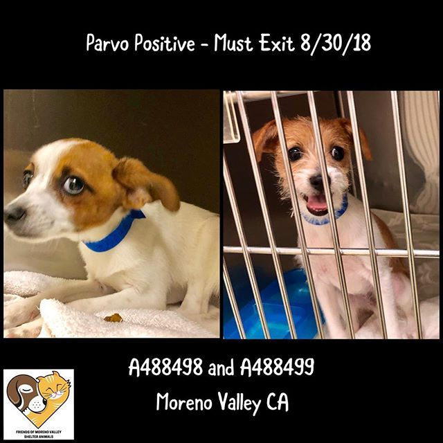 Pin On Small Breed Dogs Urgent Rescue Adoption