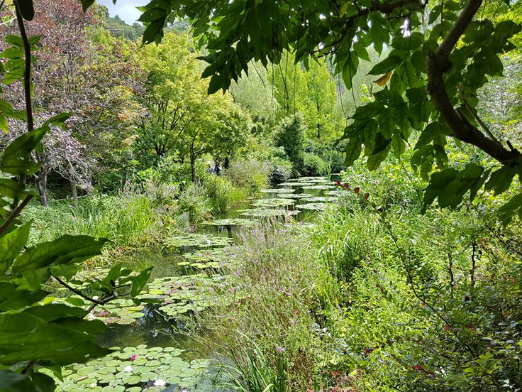「モネの庭」マルモッタン 水の庭 Claude Monet's garden in Koch Japan.  He loves beautiful garden. This is Water garden.