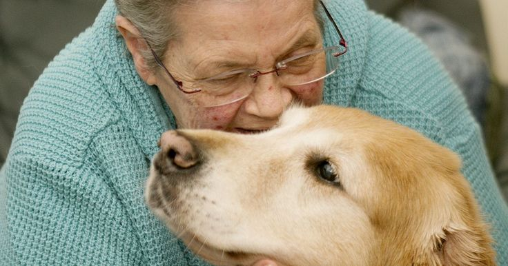 More than $6,000 raised in 2009 to help Bonita Swan pay for surgery for golden retriever.