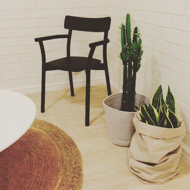 Beach house styling #interiordesign #cactus #uashmama #chiaro #mattiazzi #district_au #armadilloandco