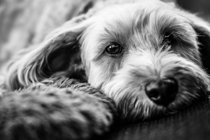 'Champ' #Dog #Pets #Love
