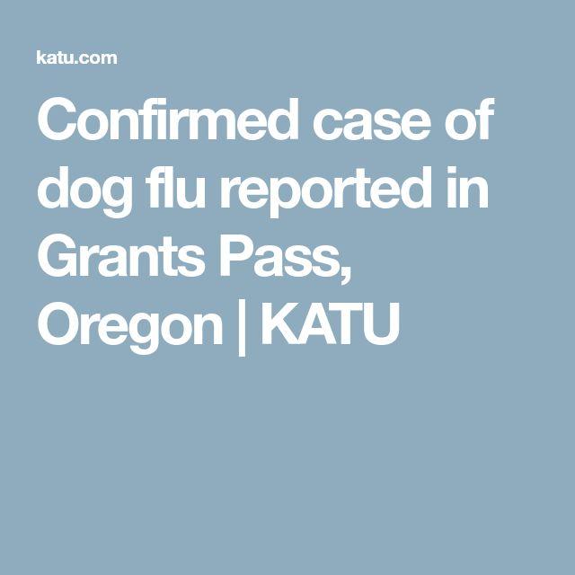 Confirmed case of dog flu reported in Grants Pass, Oregon | KATU
