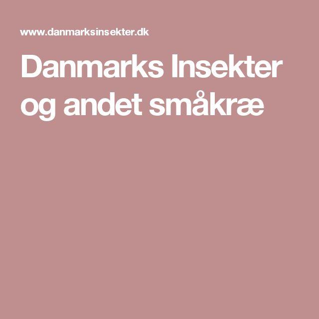 Danmarks Insekter og andet småkræ