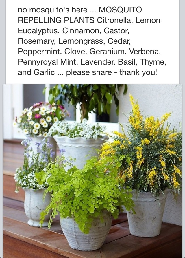 327 best images about outdoor planters amp pots on pinterest