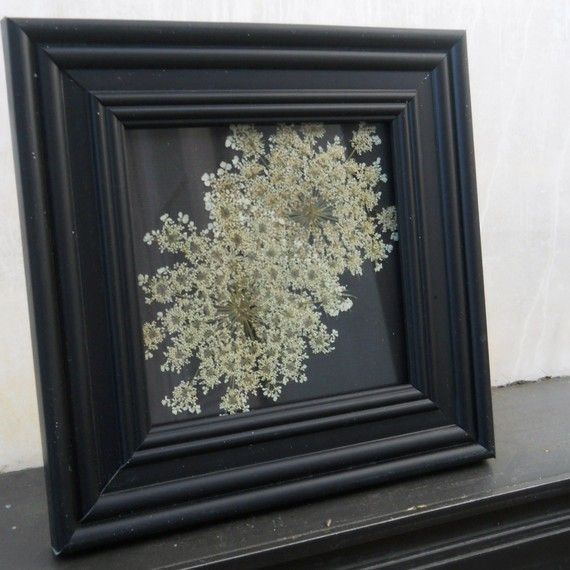 Framed Double Queen Anne's Lace Flower Pressing by GlassandGarden