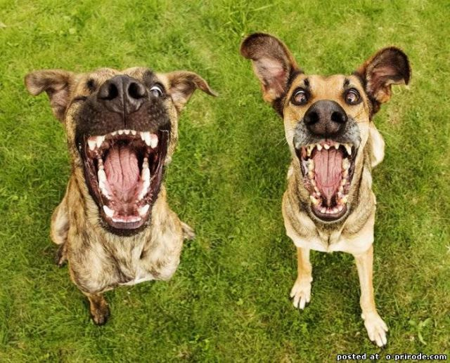 Очень позитивные портреты собак – 18 фото