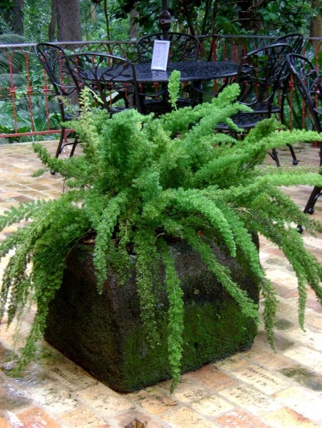 how to stop moss growing on concrete