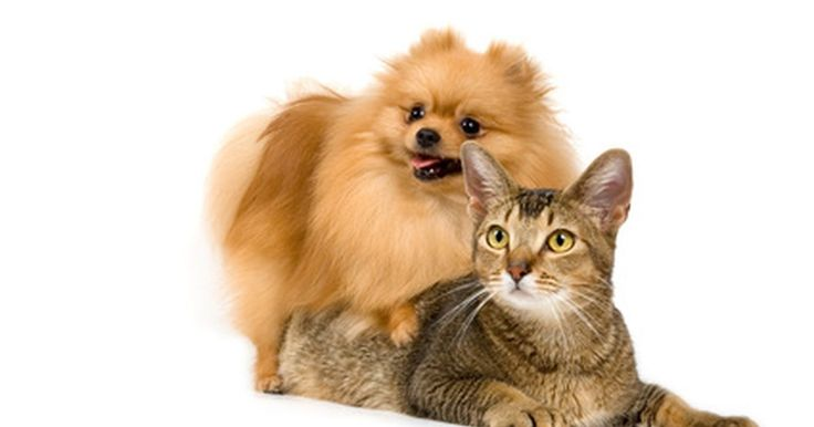 Síntomas de E. Coli Giardia en un perro y un gato. Giardia, pequeños parásitos protozoarios, puede afectar a perros y gatos. Los parásitos viven en los intestinos de los animales y pasan a través de las heces. Escherichia coli, normalmente se conoce como E. coli, también se encuentra en los intestinos de los mamíferos y ciertas cepas de las bacterias gram-negativas son perjudiciales para los ...