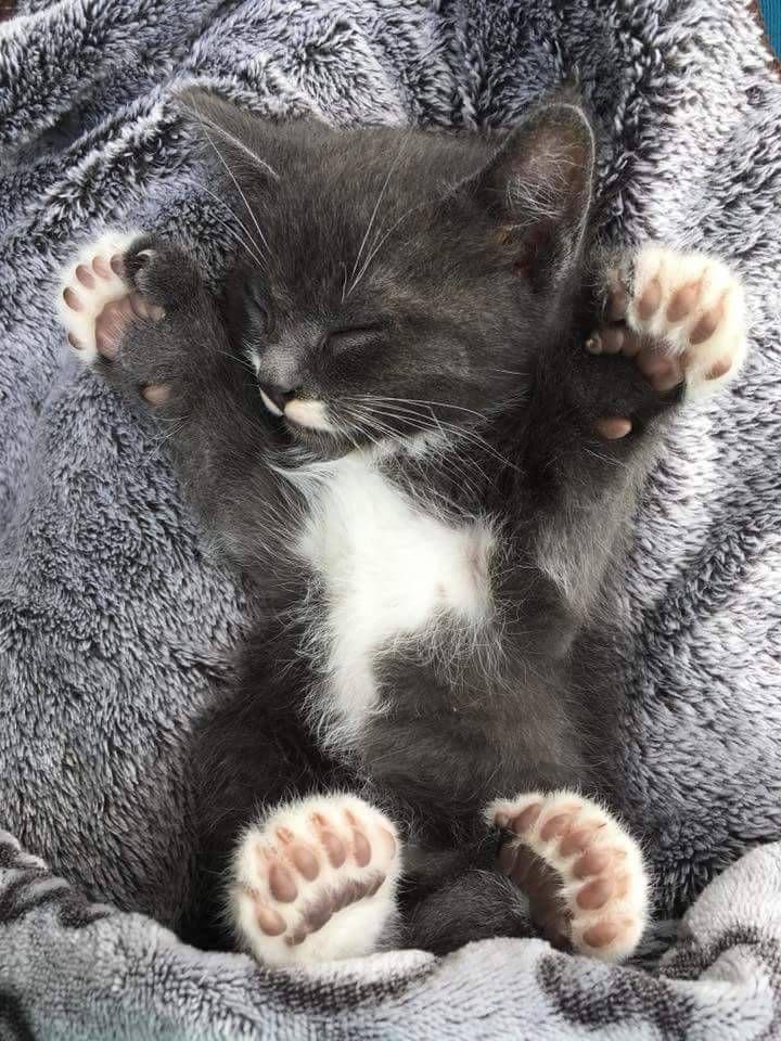 Картинки спокойной ночи с котятами прикольные, рисунок смешной надпись