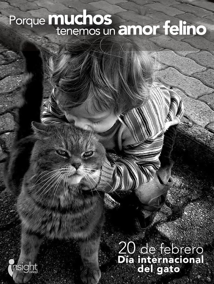 #DiaDelGato Todos tenemos un amor felino.