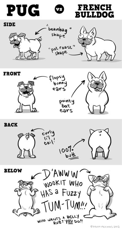 Pug vs French Bulldog (via Sheldon® Comic Strip: Daily Webcomic by Dave Kellett)