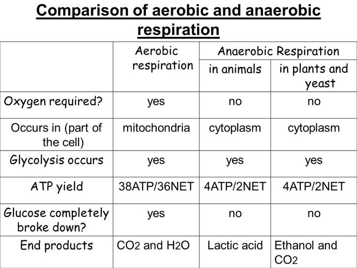 best 25  anaerobic respiration ideas on pinterest