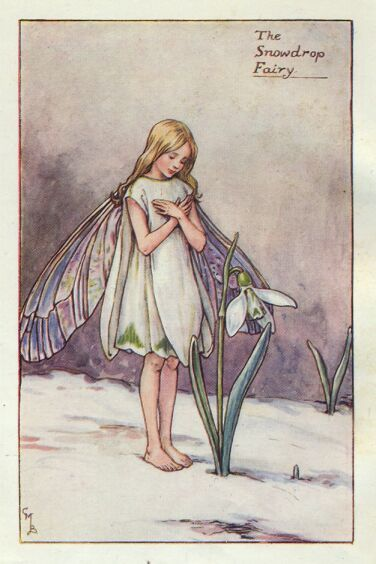The Snowdrop Fairy from Flower Fairies illustrated by Cicely Mary Barker (1895 - 1973).