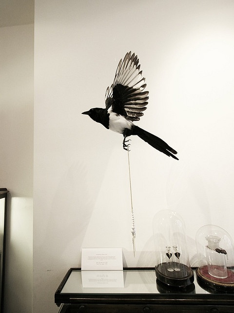 The Thieving Magpie by *-*-*-*-*-* Philippe Brysse, via Flickr