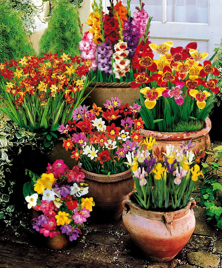 Container Gardening Ideas For Summer: 44 Best Top Annuals To Plant In The Summer Images On