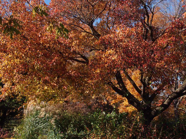 Beautiful fall colors // Minnesota Landscape Arboretum