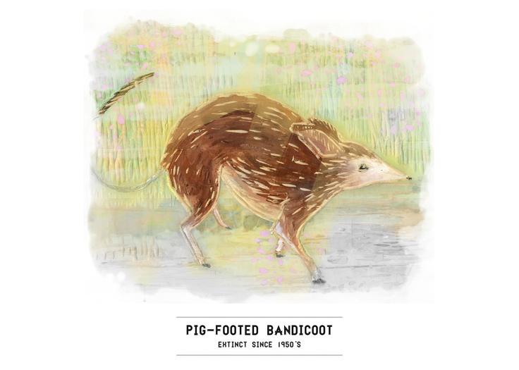 Extinct Series: Pig-footed Bandicoot