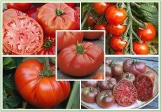 Heirloom Tomato Seeds For Sale | Buy Tomato Seeds in Packets or Bulk