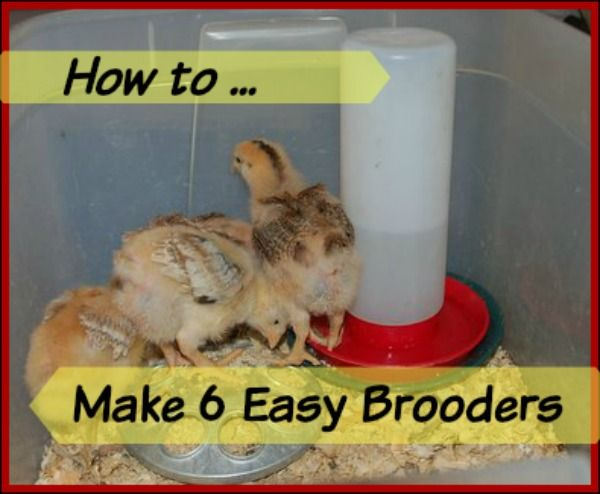 Best 25 poultry house ideas on pinterest chicken bird Make your own hen house